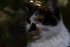 夜の猫 顔アップ