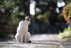 寺猫の昼下がり 2