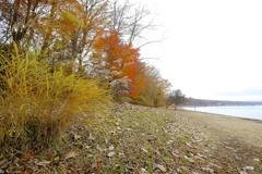 湖畔の秋3