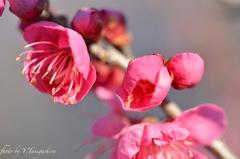 花芯の輝き