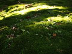 陽だまりの苔