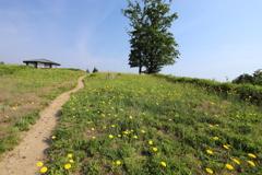 黄色い花の風景