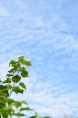 夏のうろこ雲