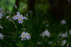 暗がりに咲く花