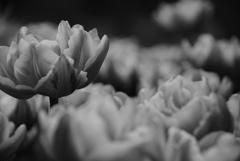 たくさんの花びら
