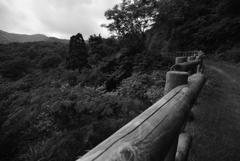 山奥へ続く道