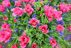 花のビル群を上空より撮影