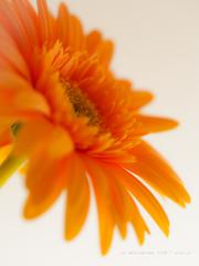 花から癒しを…