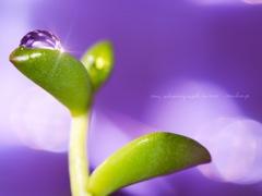 私の雫世界~purple~*