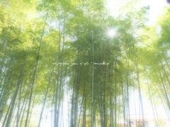 風に靡く木々の音*
