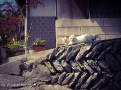 豊島の猫様*