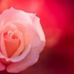 花ぬすっとⅣ