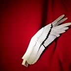 wing_ferie