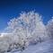 薄雪の小径