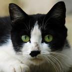 猫のシッポ(冬休み中)